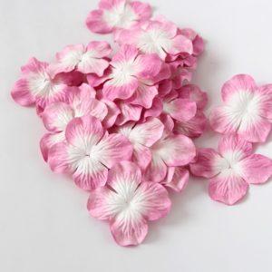 Гортензия большая бело-розовая