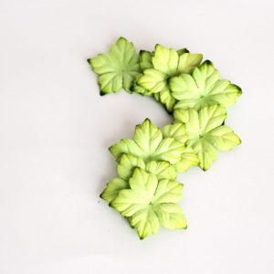 Лепестки пуансетий зеленые