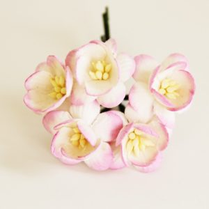 Цветы вишни бело-розовые
