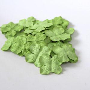 Гортензии большие зеленые, 10 шт.