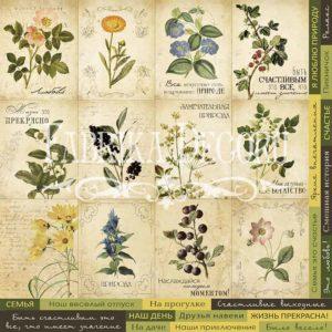 Лист для вырезания 1 Botany summer 01018-1 rus