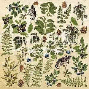 Лист для вырезания 2 Botany summer 02018-2