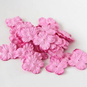 Гортензии маленькие розовые