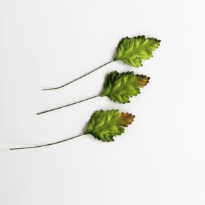 Листья шиповника зеленые